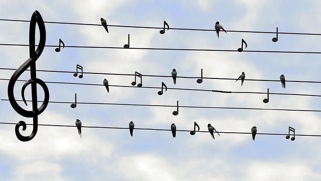 Oiseaux sur les fils haute tension représentant les notes d'une portée en clé de sol