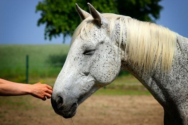 contact d'une main sur le museau d'un cheval
