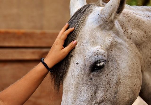 une main caresse la crinière d'un cheval
