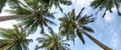 Vue du ciel depuis le pied des palmiers